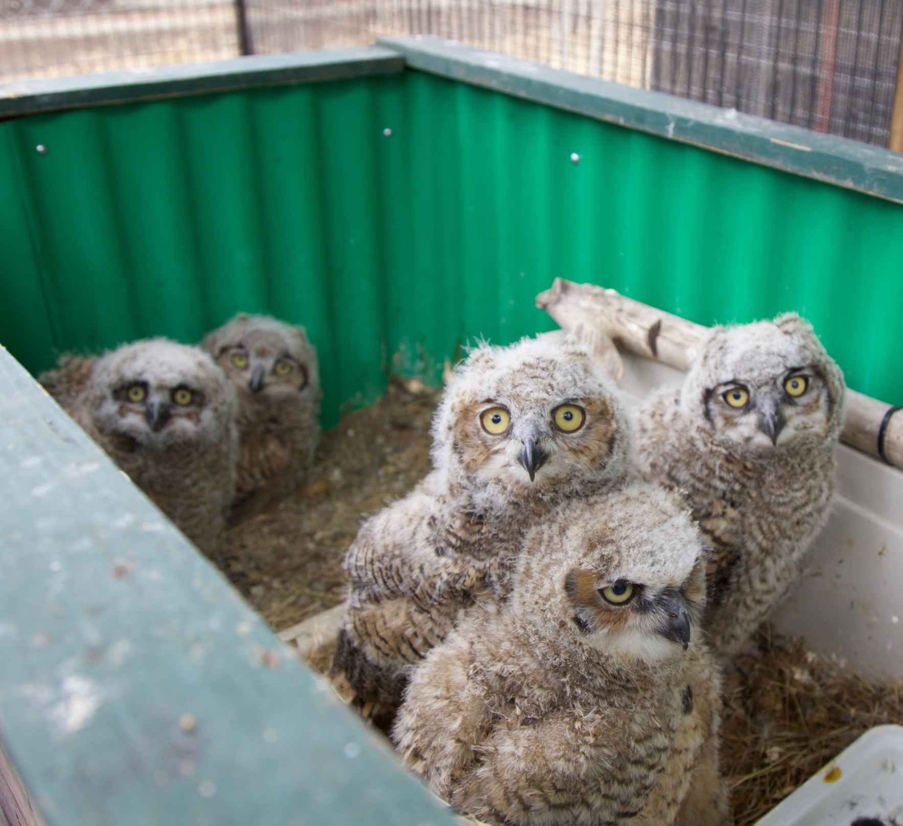 Help us feed and care for young birds image