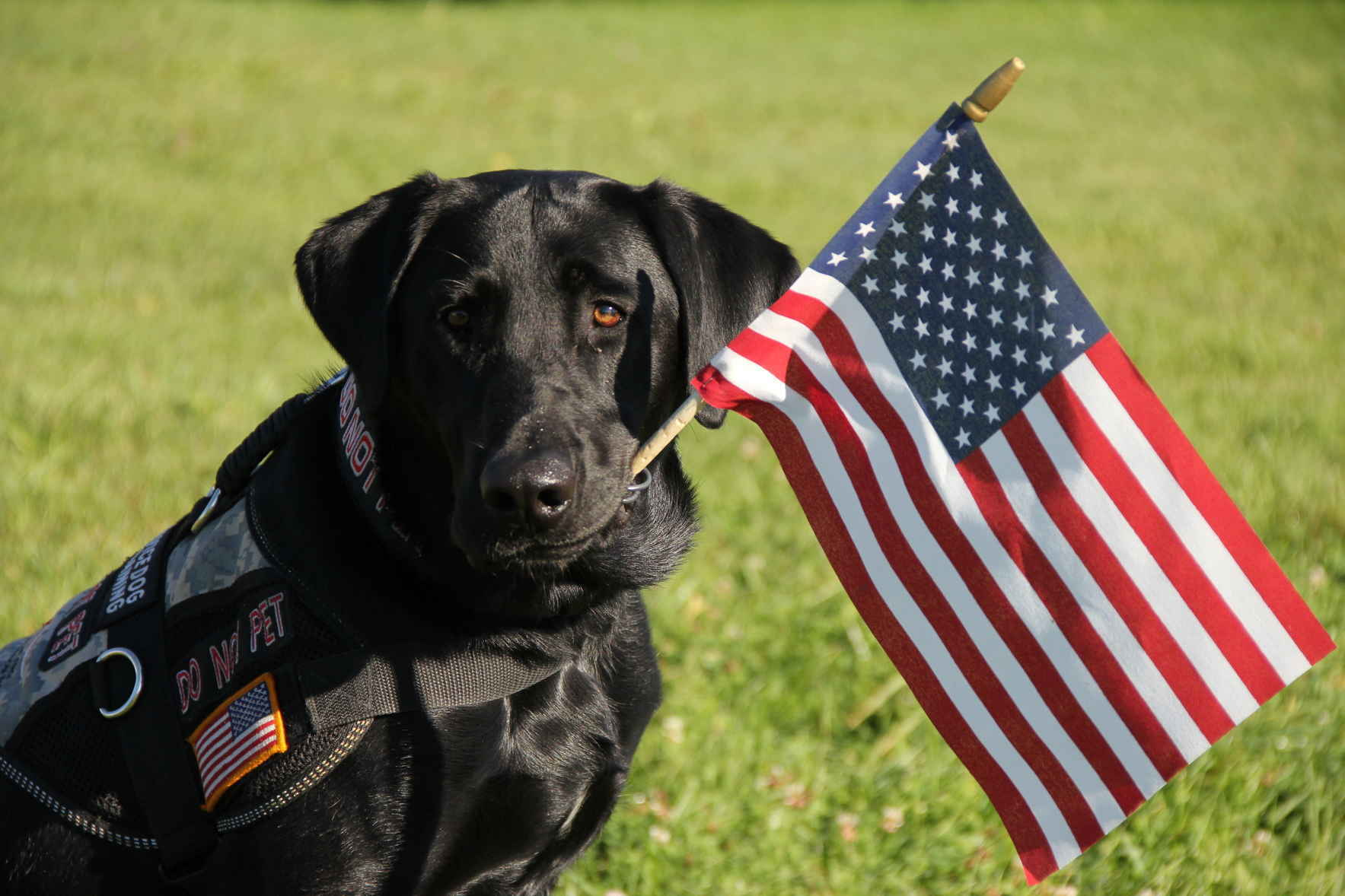 Starline Brass needs your help getting a disabled veteran a service dog! image