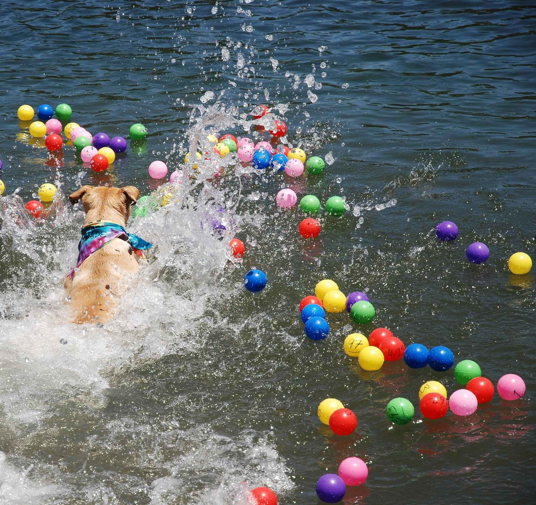 Last chance to get your Retriever's Balls! This site closes at 8pm 6/21!  image