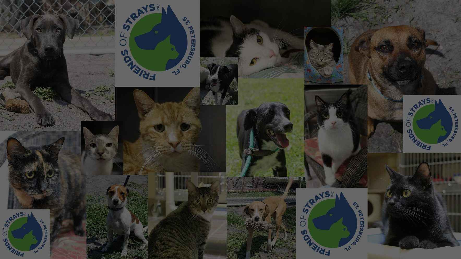 Create a Better World for Pets and People: Support FOS  image