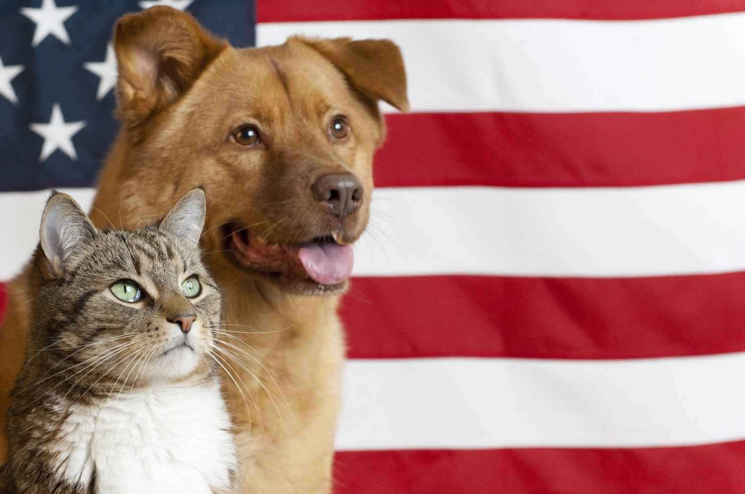 Help Cats and Dogs Pursue Liberty from Litters - Donate $17.76 Today!  image