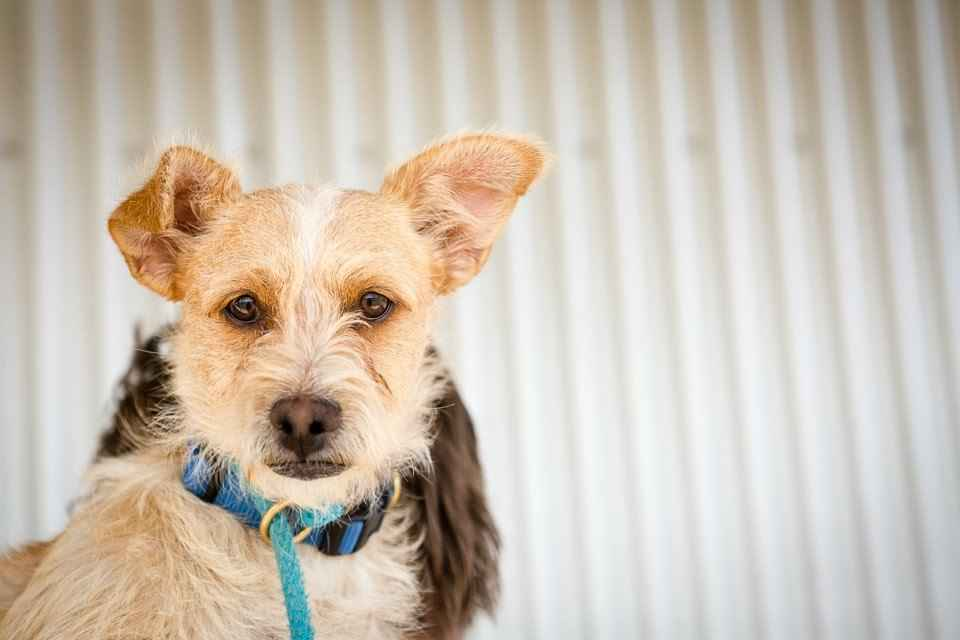 Helping the pets of Brewster County image