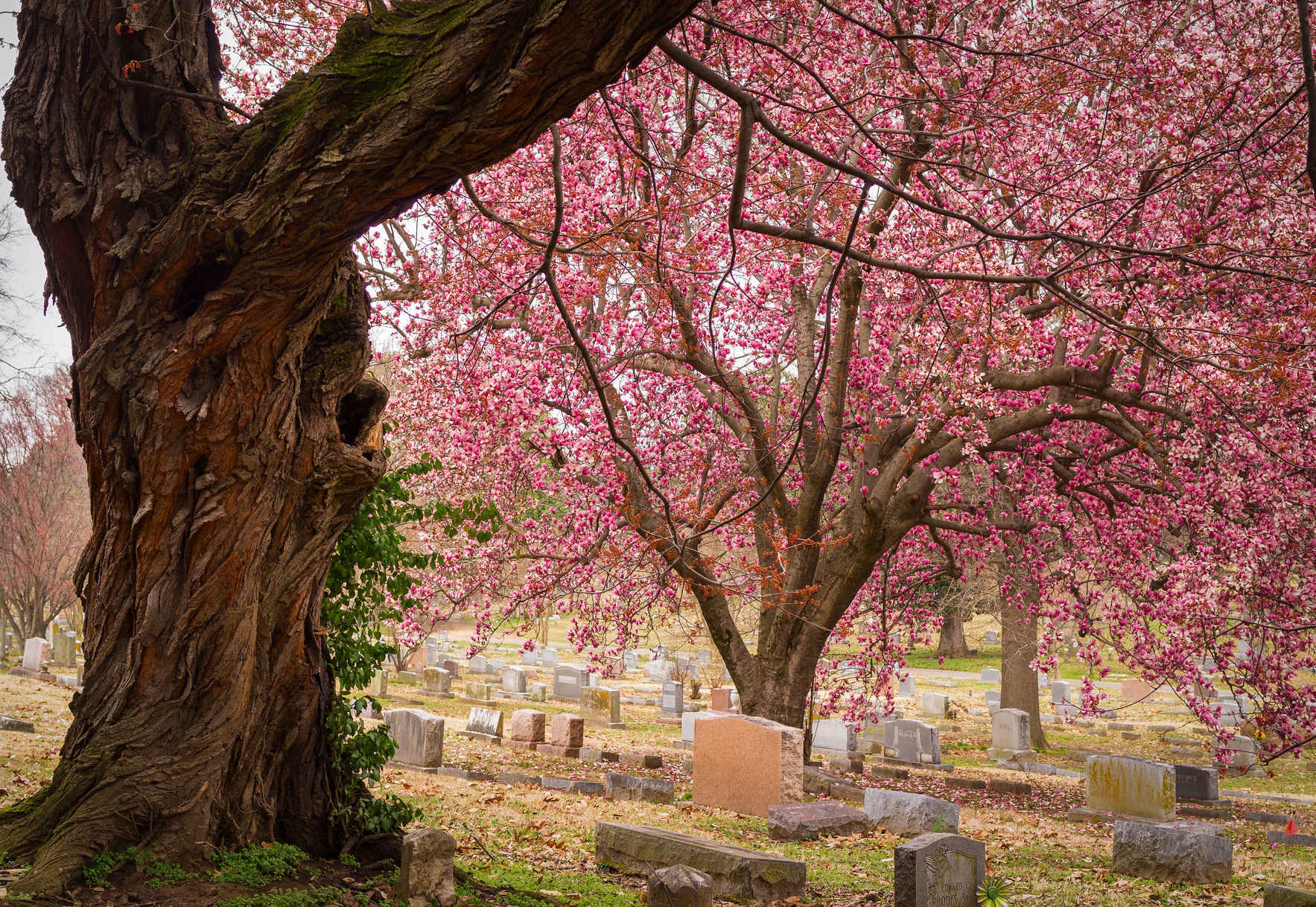 Your historic cemetery needs you.  image