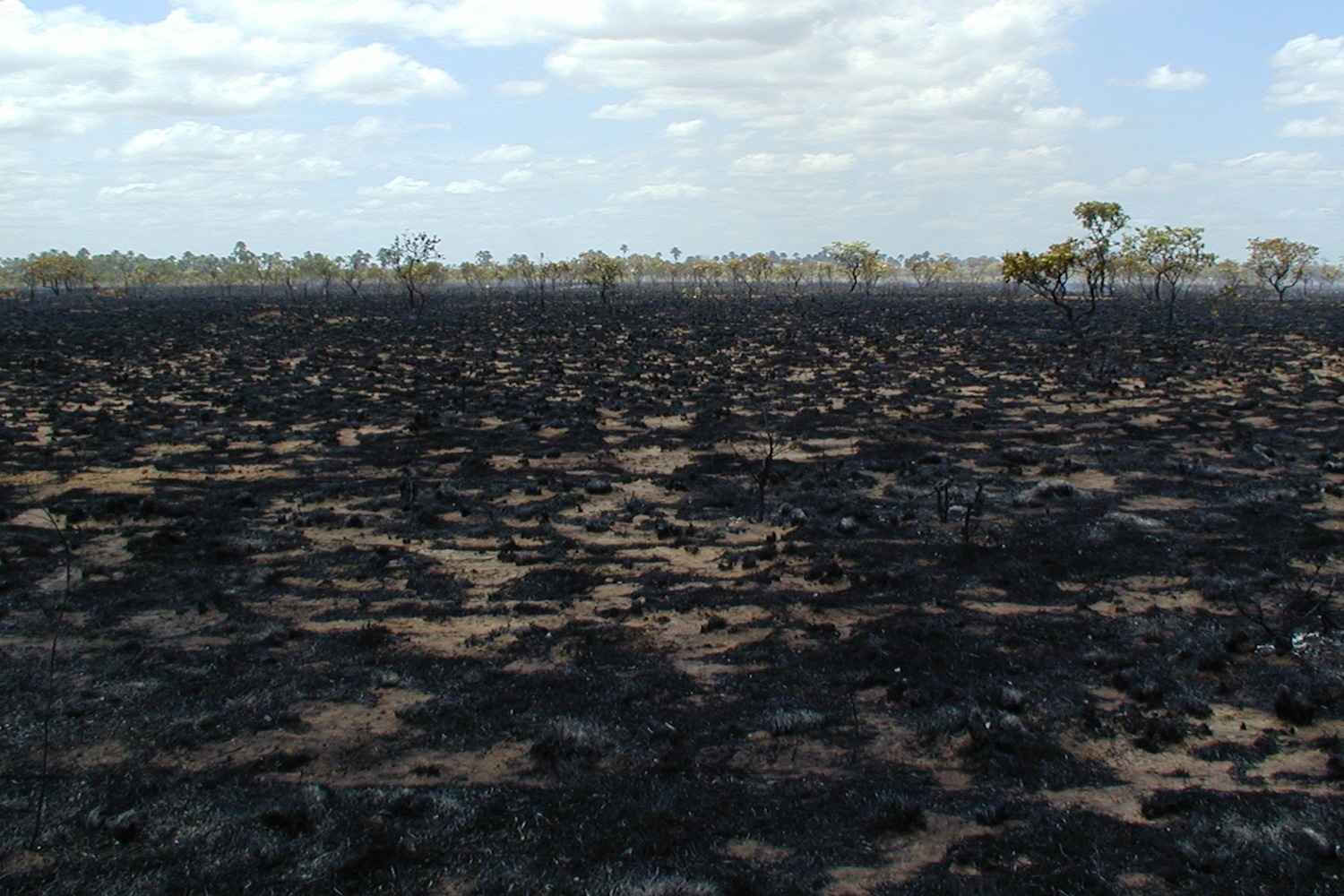 Stop the fires in the Amazon image