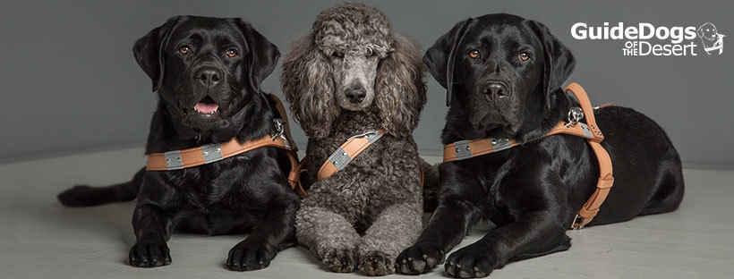 Help Us Build Guide Dog Teams Today image