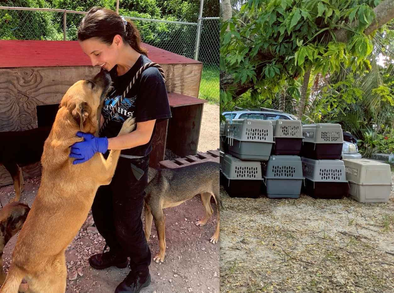 Save the innocent victims of Hurricane Dorian! image