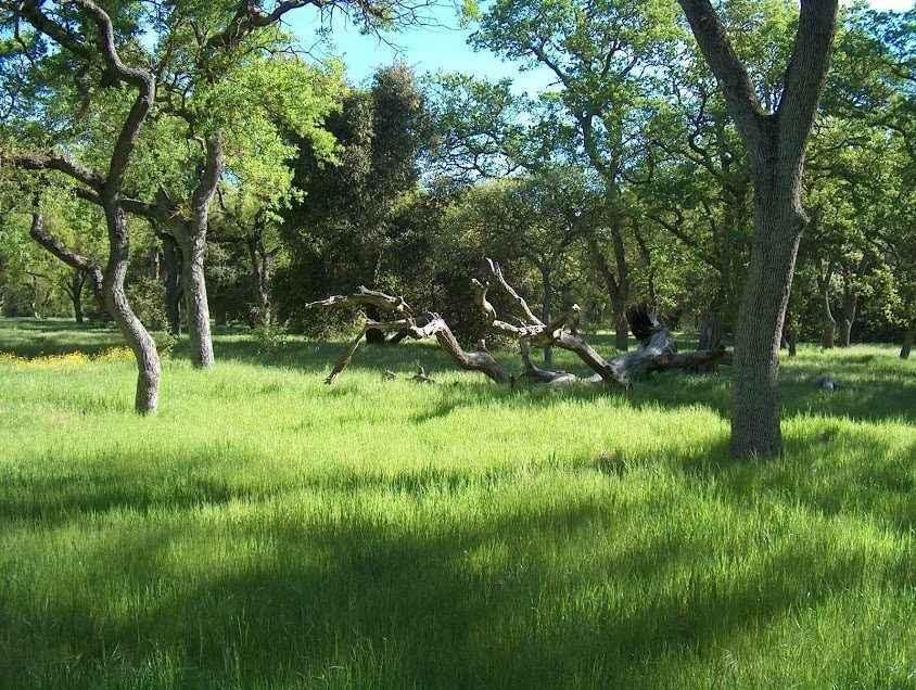 Support Guadalupe Oak Grove Park's Unique Environment image