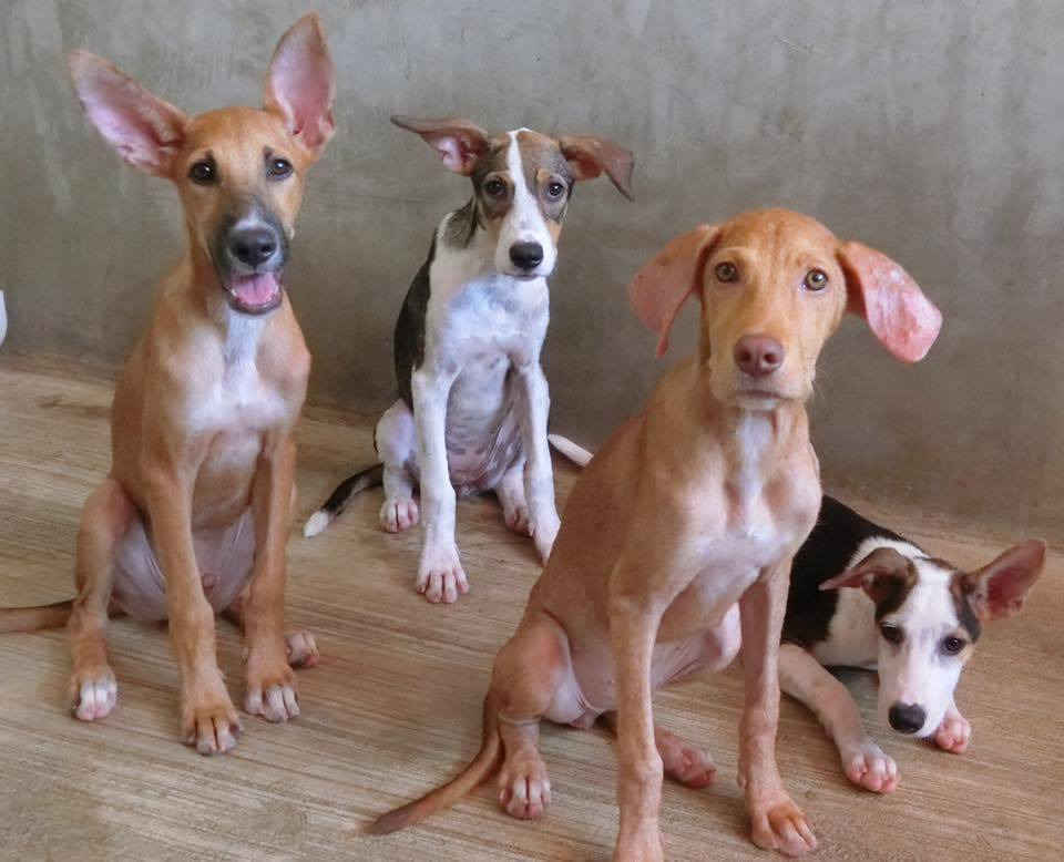 Donate now to help the rescued dogs in our shelter image