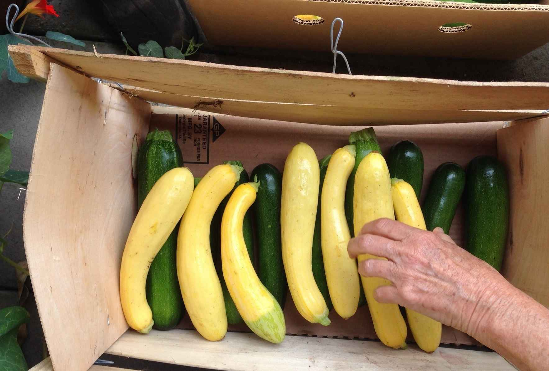 Fresh vegetables can be hard to find in food pantries.  image