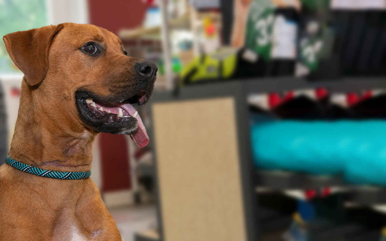 Donate Now to Improve Animal Welfare in Vigo County image