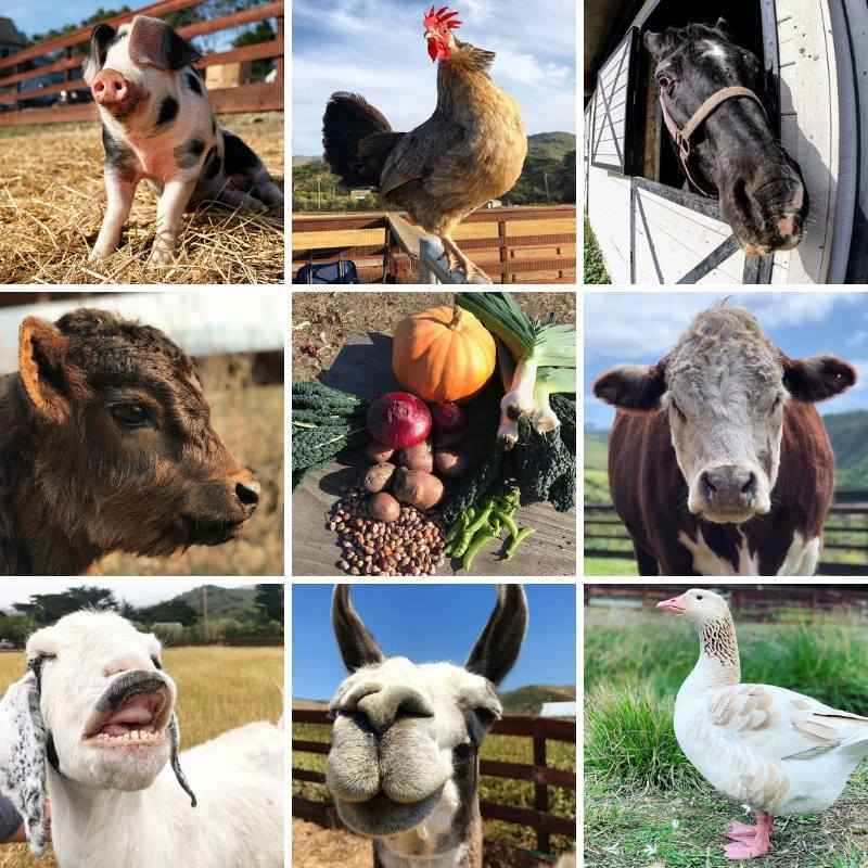 Help Create a Better World for Farm Animals image