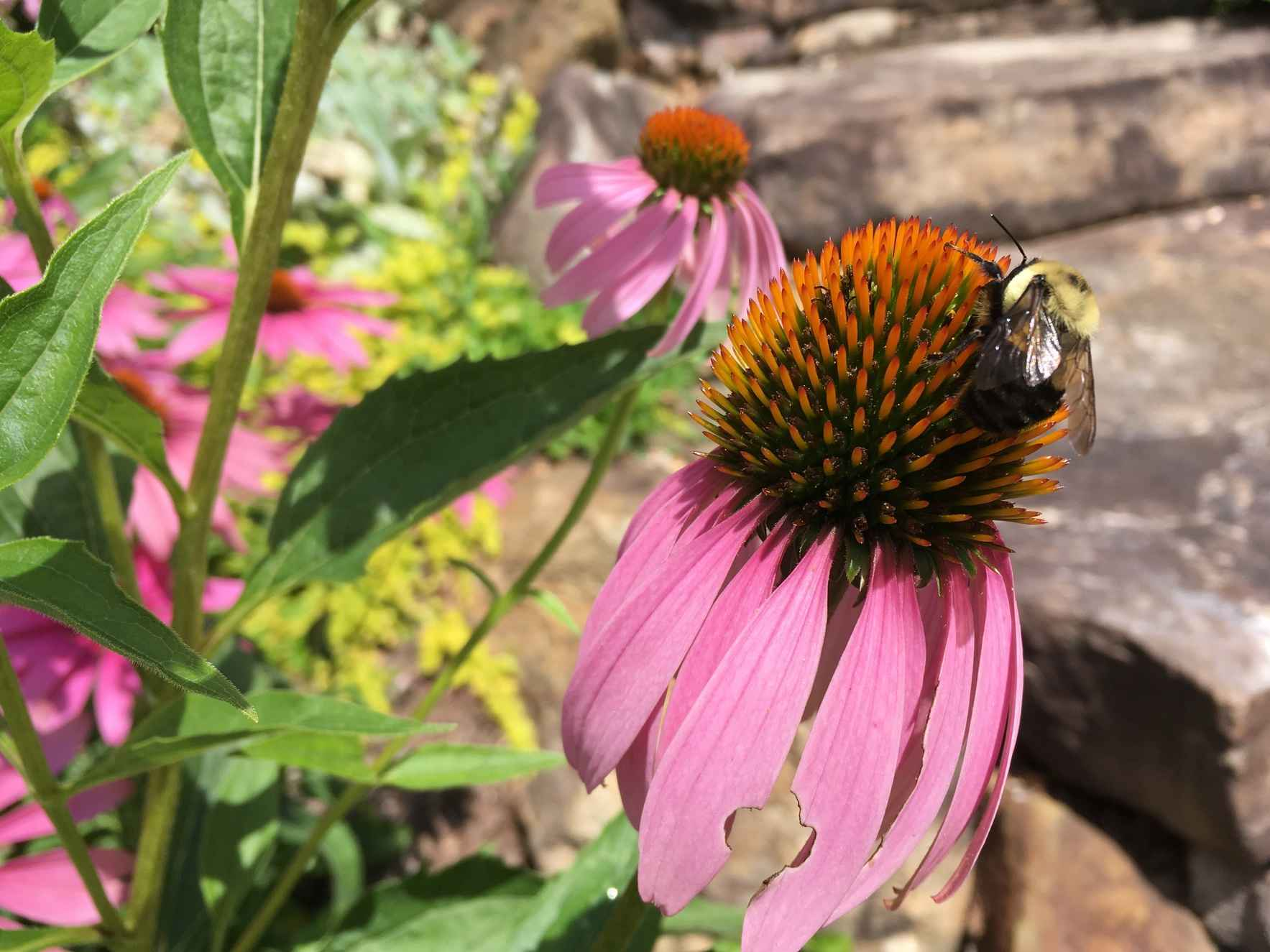 Inspiring our community, raising awareness, and increasing pollinator habitat through garden certification. image