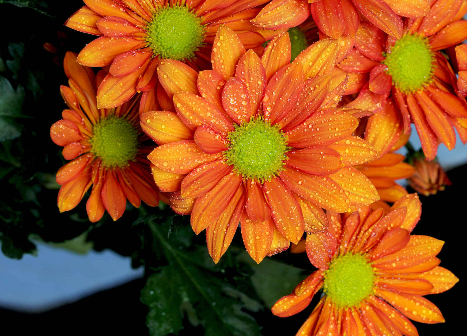 Donate $60 to Celebrate 60 Years of Providing for the Floral Industry! image