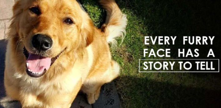 Every furry face has a story to tell. Because of You, their stories continue! image