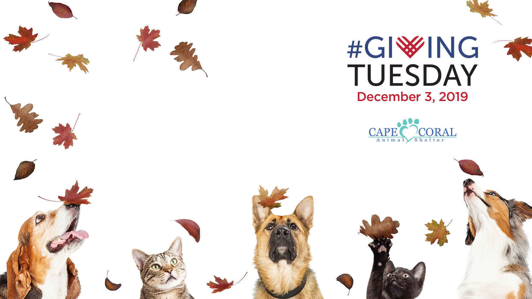 Support CCAS on #GivingTuesday  image