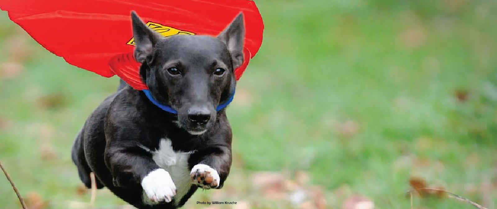Be a Pet Savers Hero image