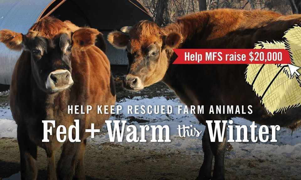 Keep Our Rescued Farm Animals Fed and Warm This Winter! image