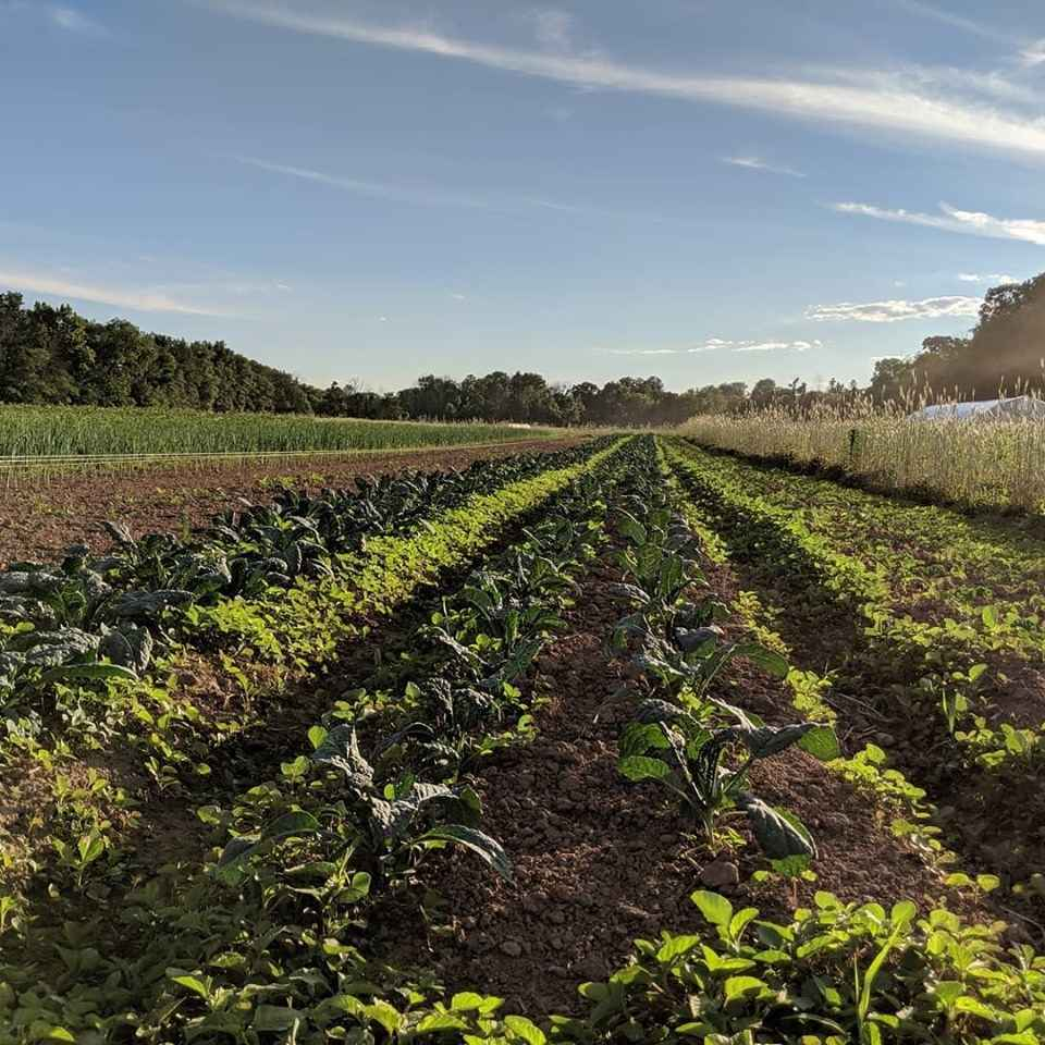 This #GivingTuesday, Show Your Support for the Rondout Valley Farmers, Food, and Community! image