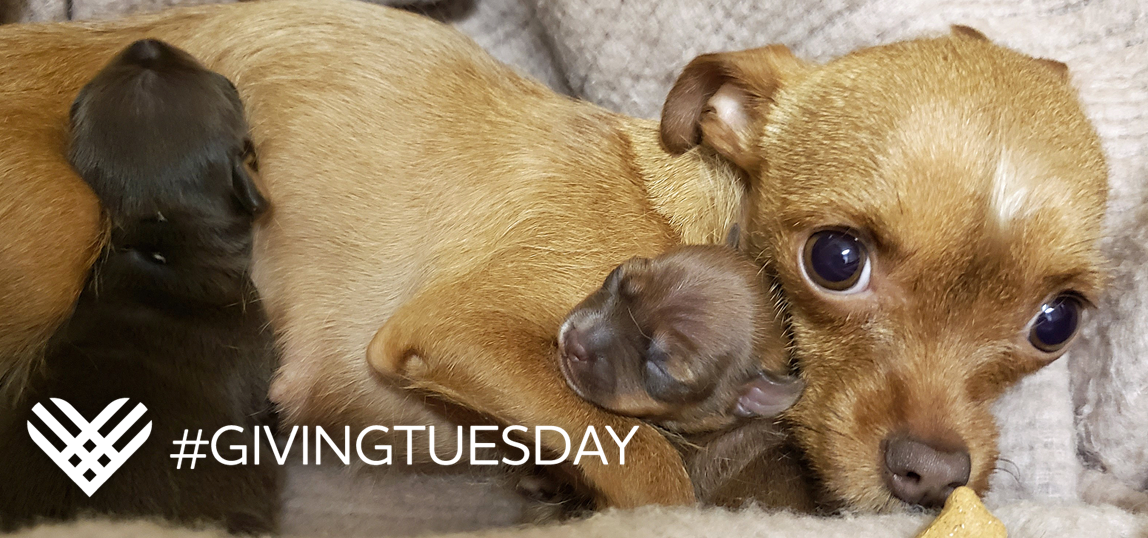 Save lives on Giving Tuesday! image