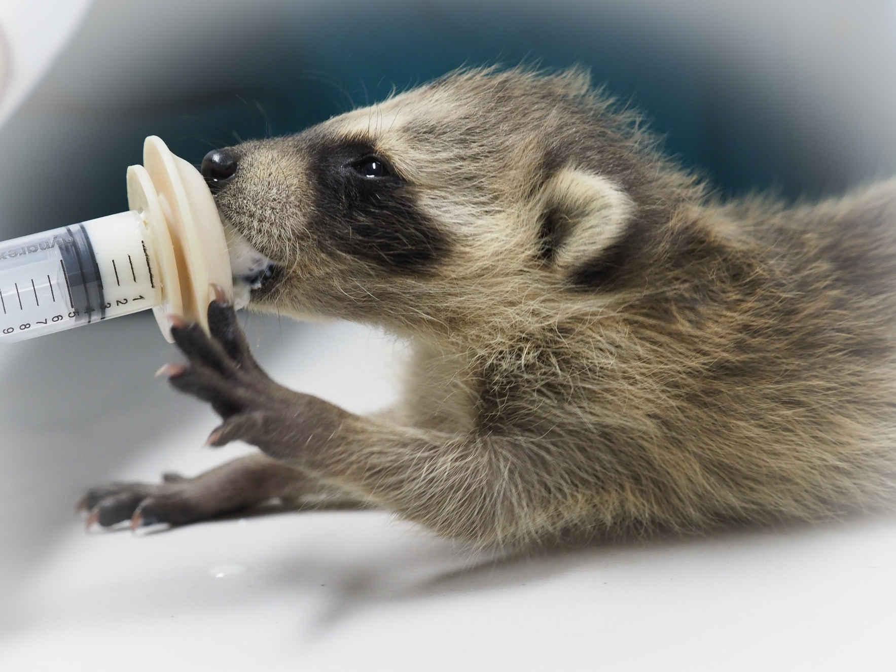 Help us Help Wildlife image