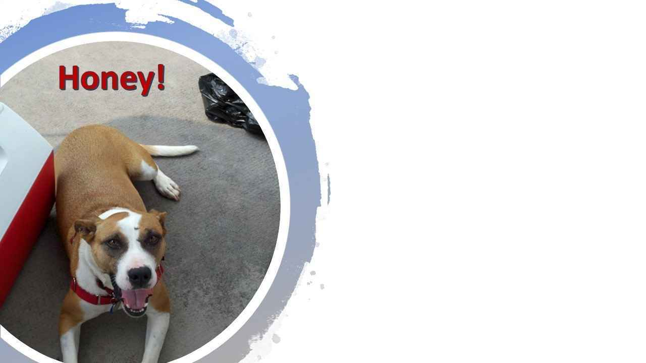 Donate now to help Humane Society of Charles County emergency medical fund for homeless animals. image