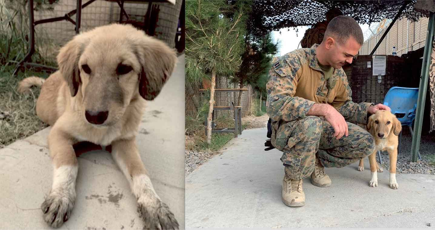 Donate now to help a military hero bring his friend Sox home to safety! Their story below... image