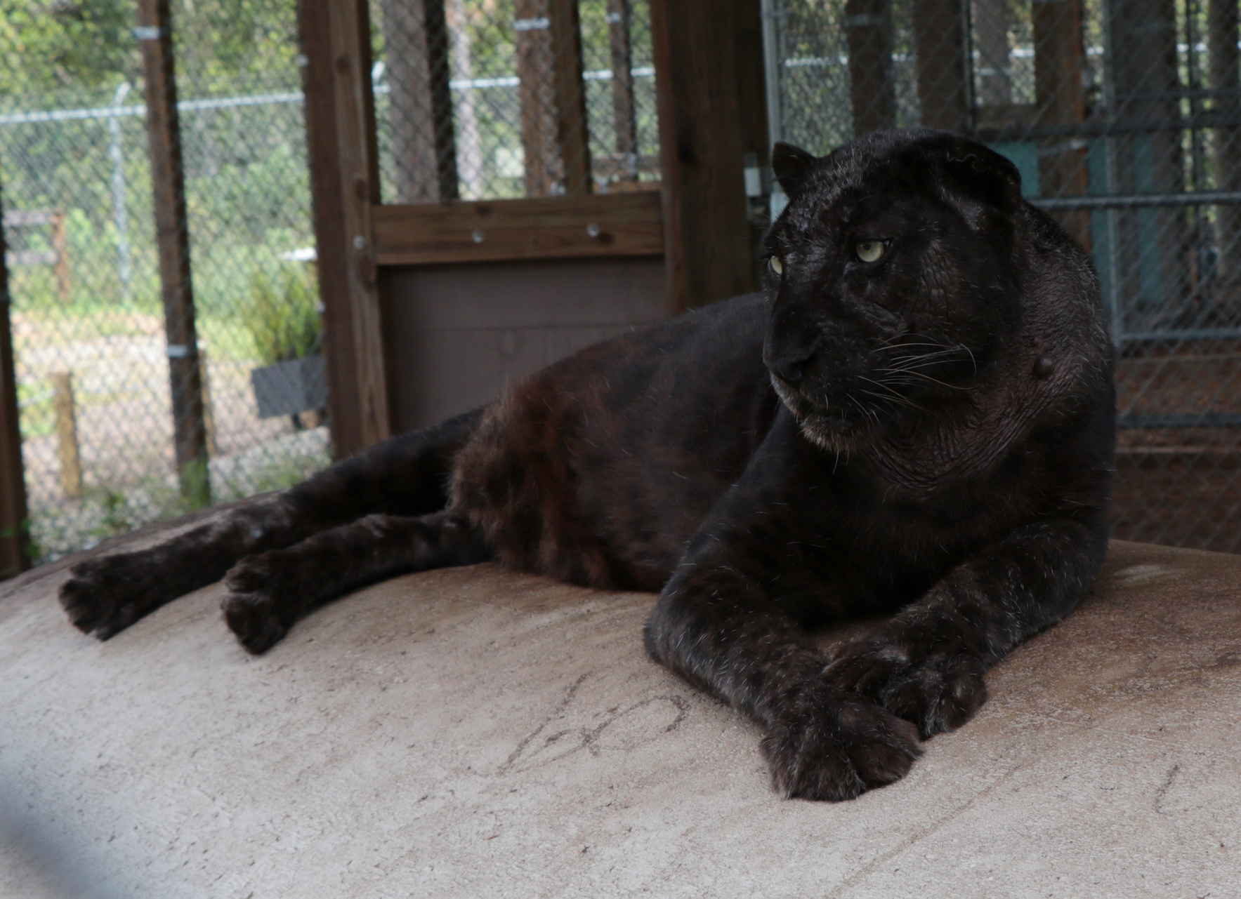 To raise $2020 in honor of Gypsy's 20th birthday  image