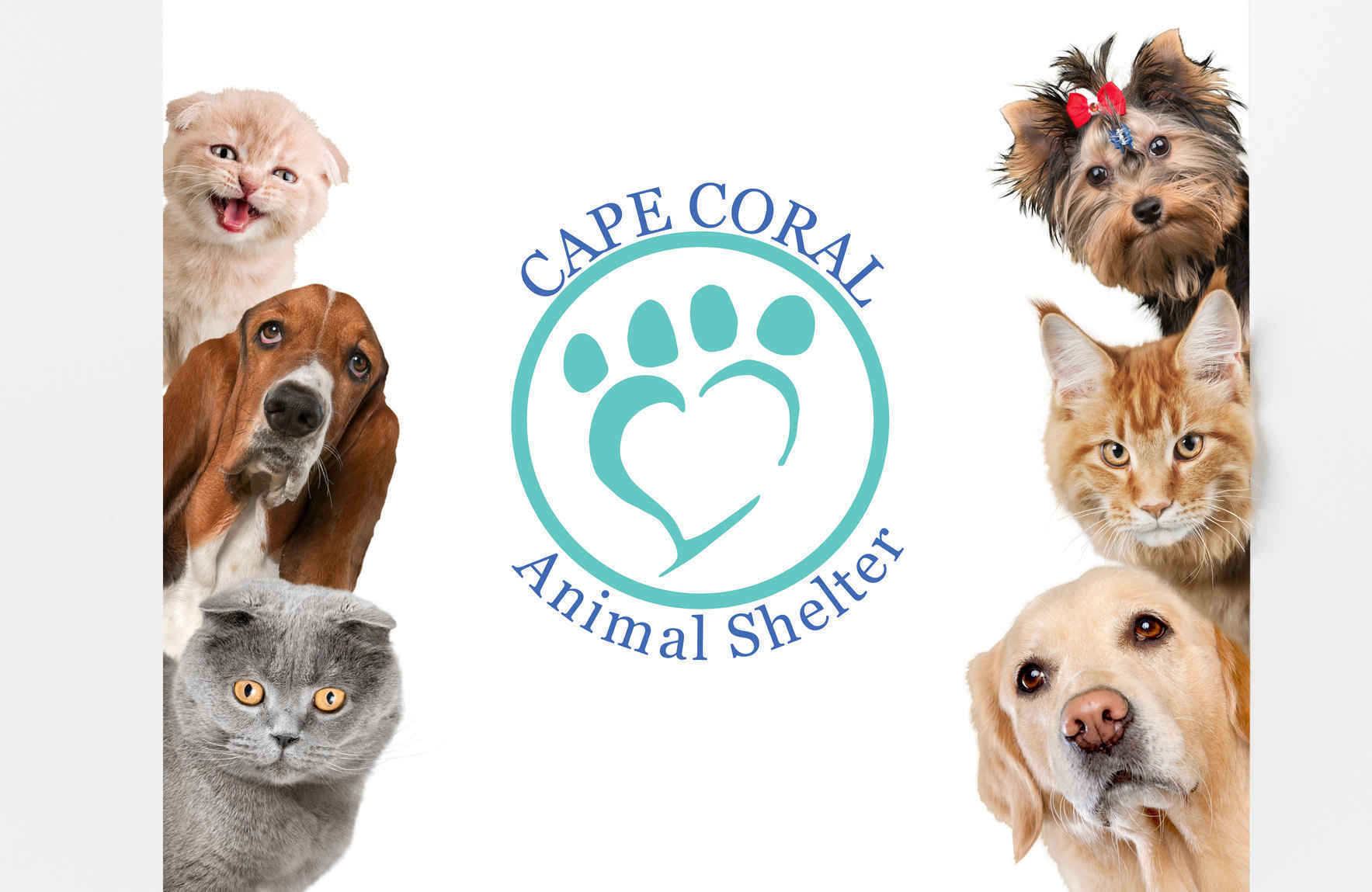 Help Bring New Hope to Homeless Animals image