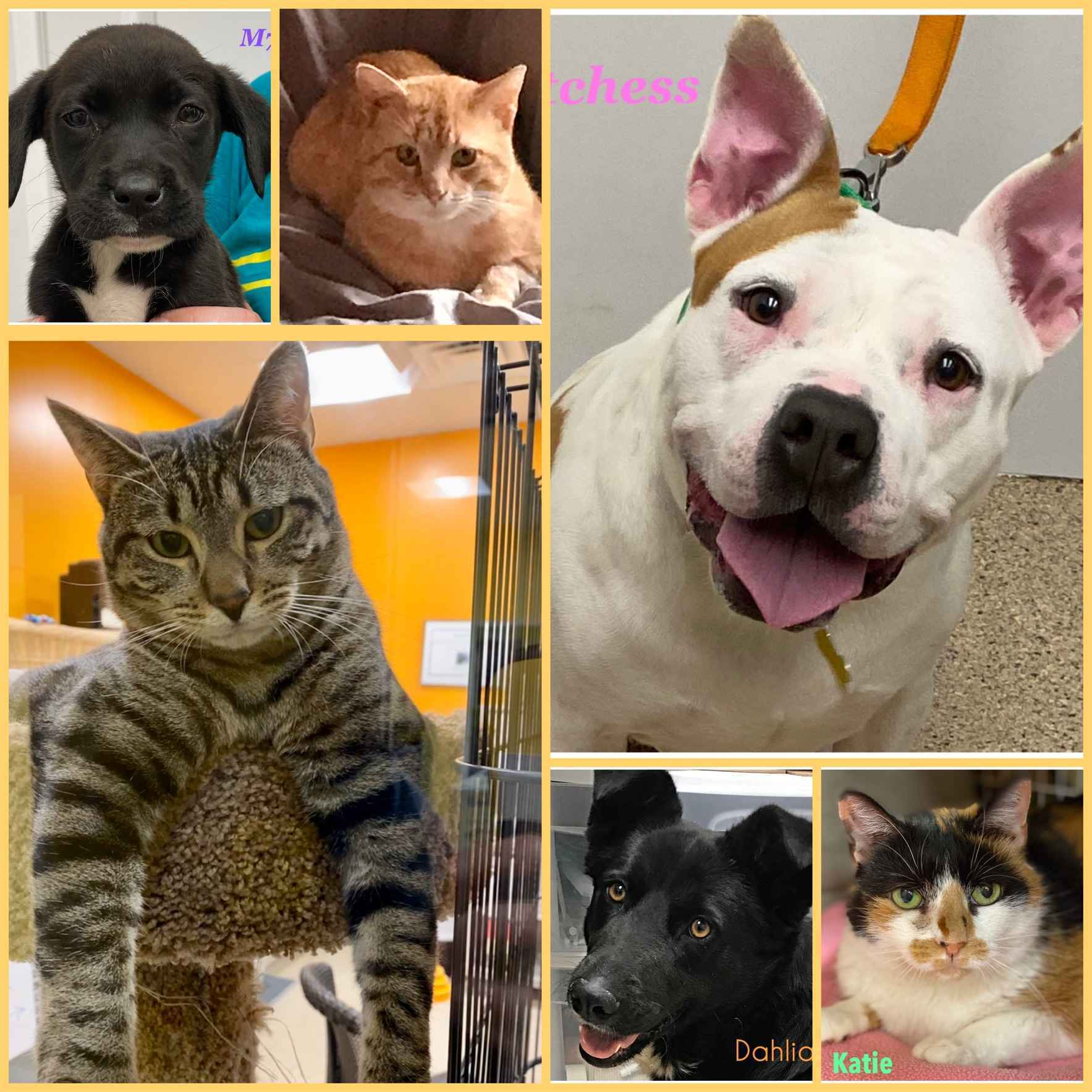 Donate today to help AHeinz57 continue our mission to save companion animals. image