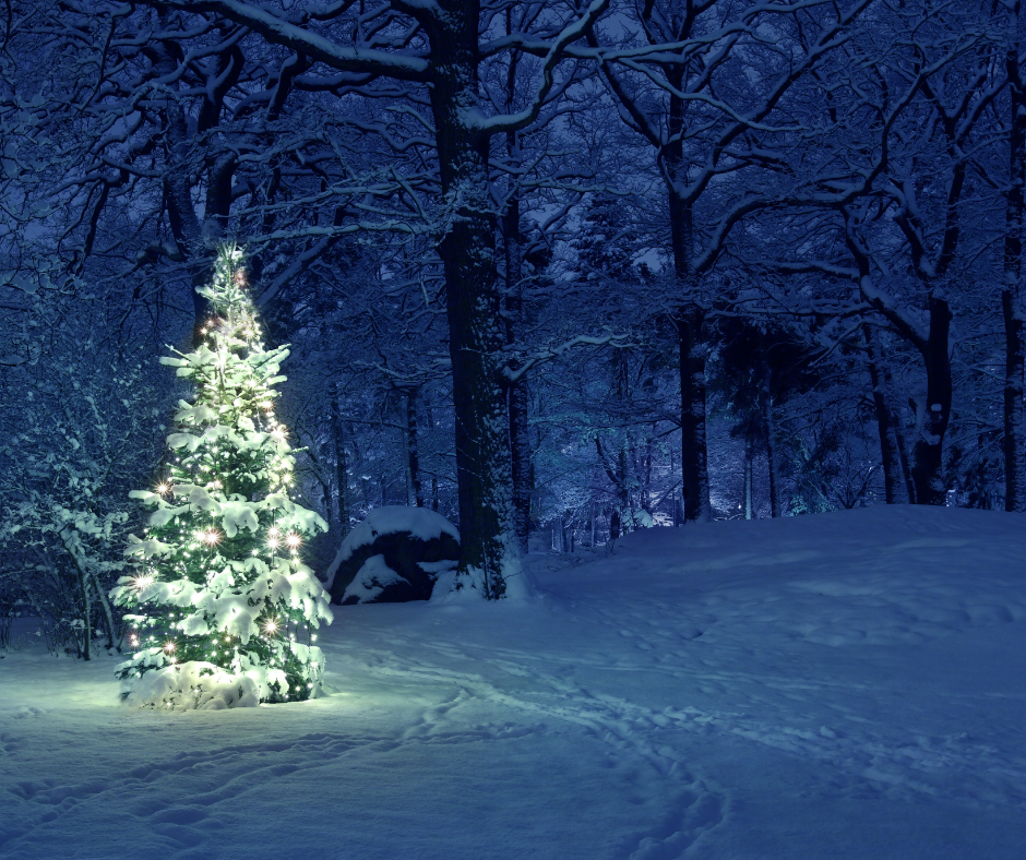 Let a light shine on the Tribute Tree! image