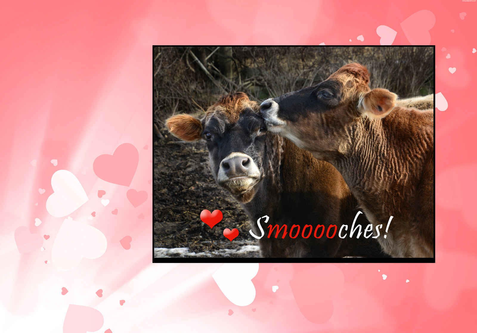 Have a Sweet & Compassionate Valentine's Day image