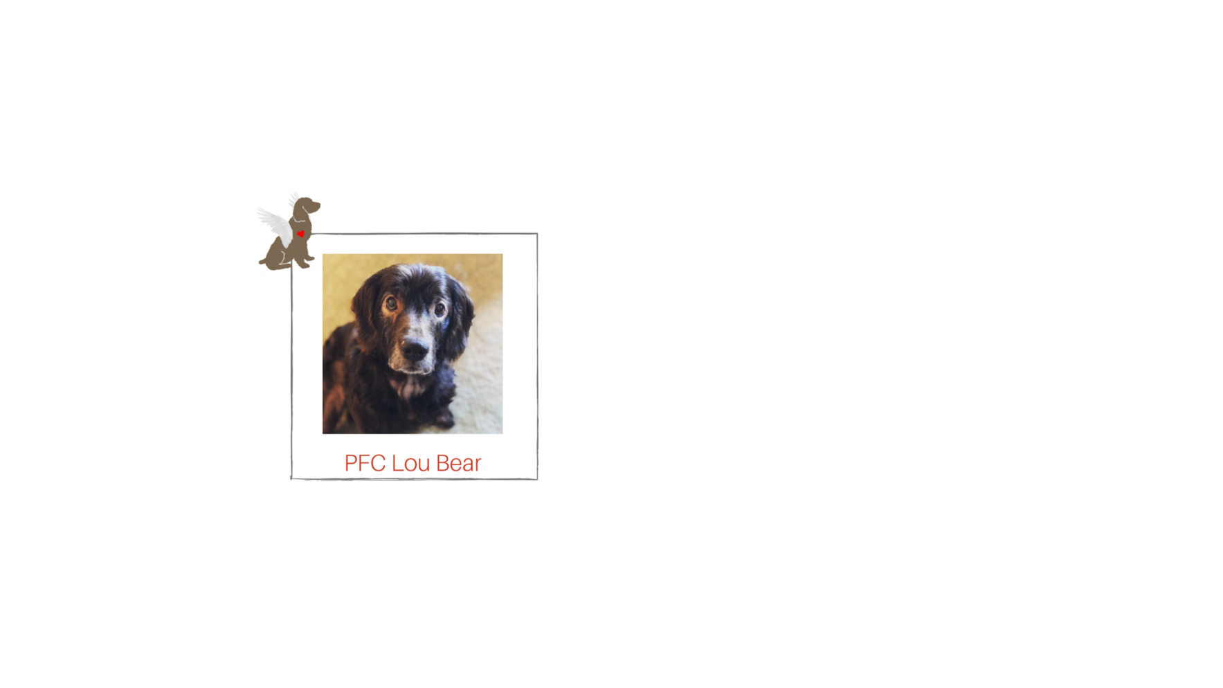 You can be Lou Bear's Guardian Angel! Check Out His Story Below! image