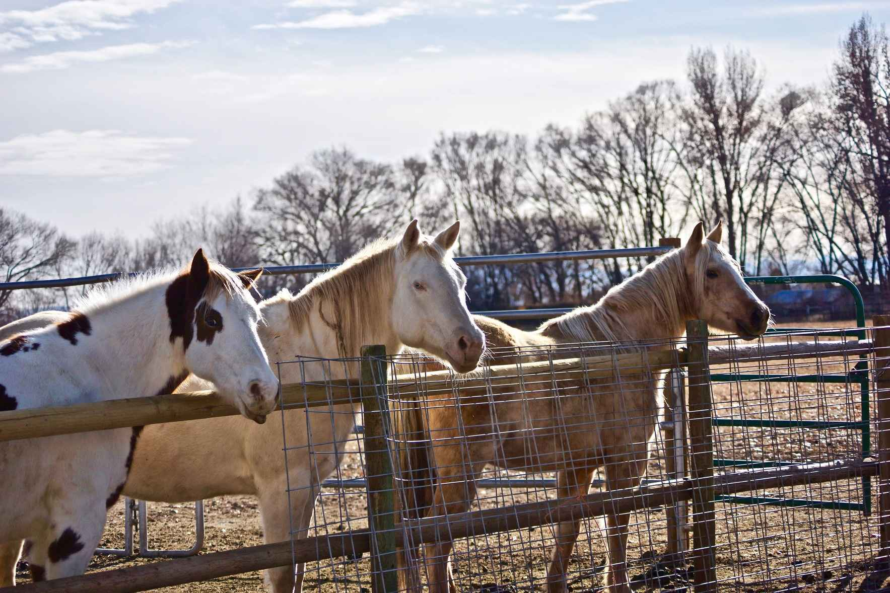 Donate Today - Help our Horses & Support Our Programs image