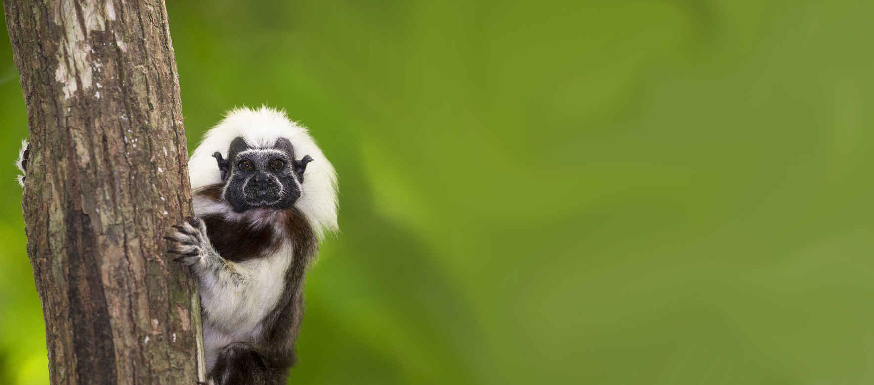 BUY A TITI POST, SAVE A TREE, SAVE A TAMARIN image