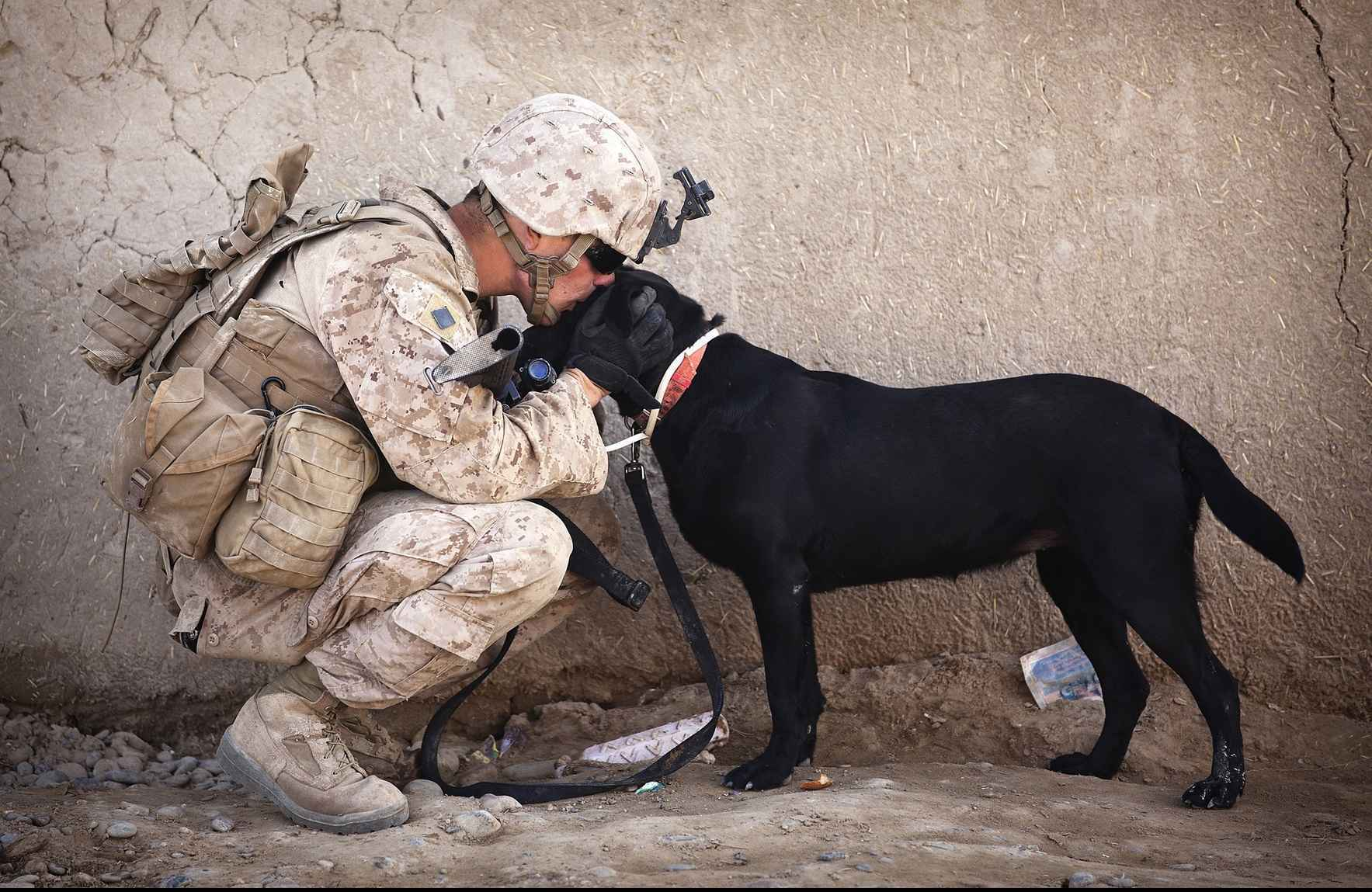 Every veteran who needs a dog, gets a dog! image