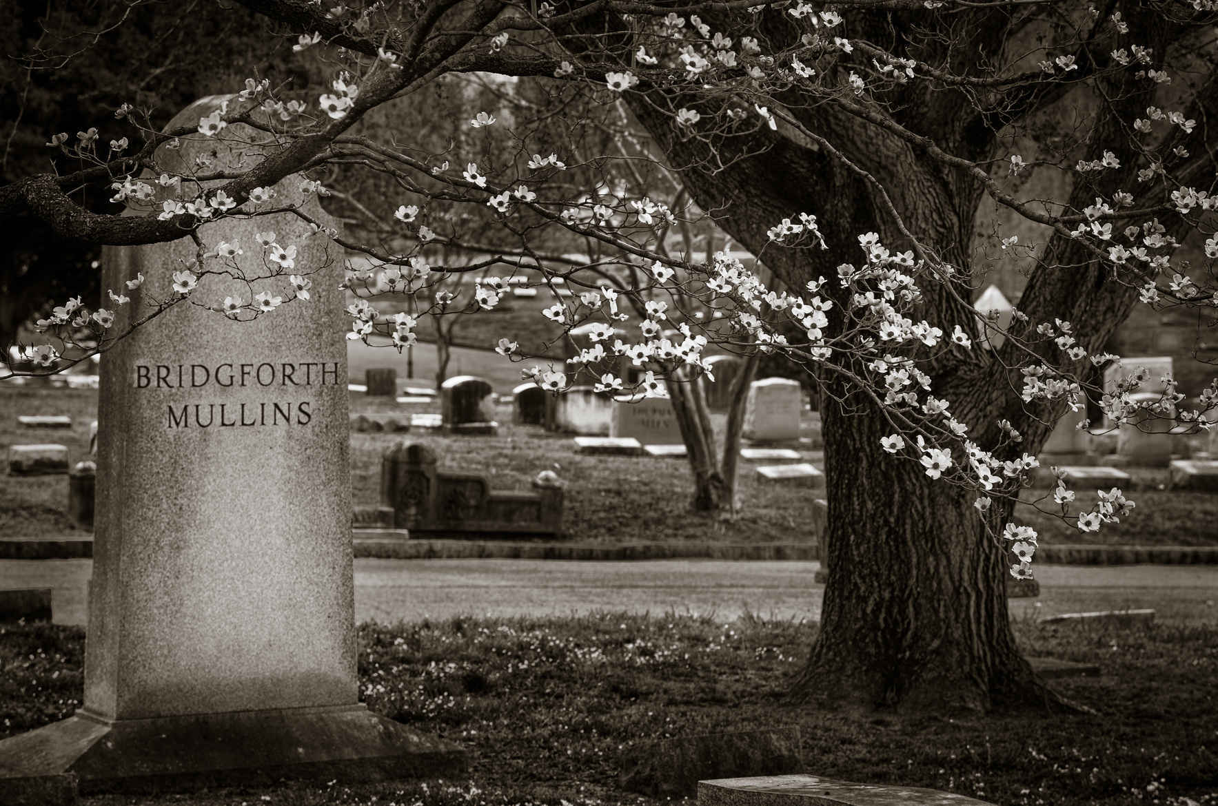 Support Elmwood Cemetery! image