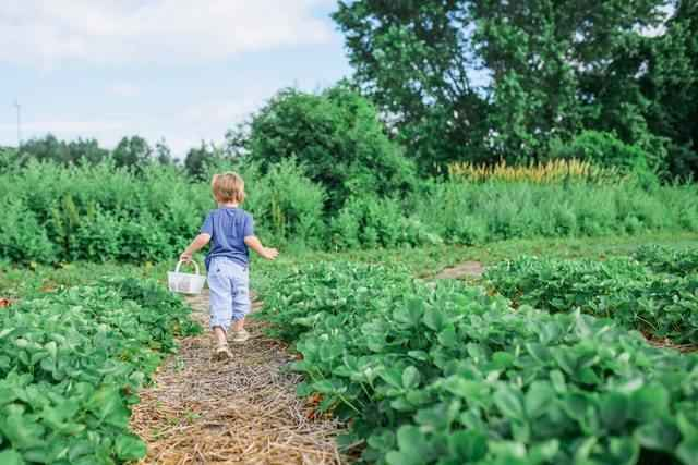 Help support 50 families in Washington County grow a garden image