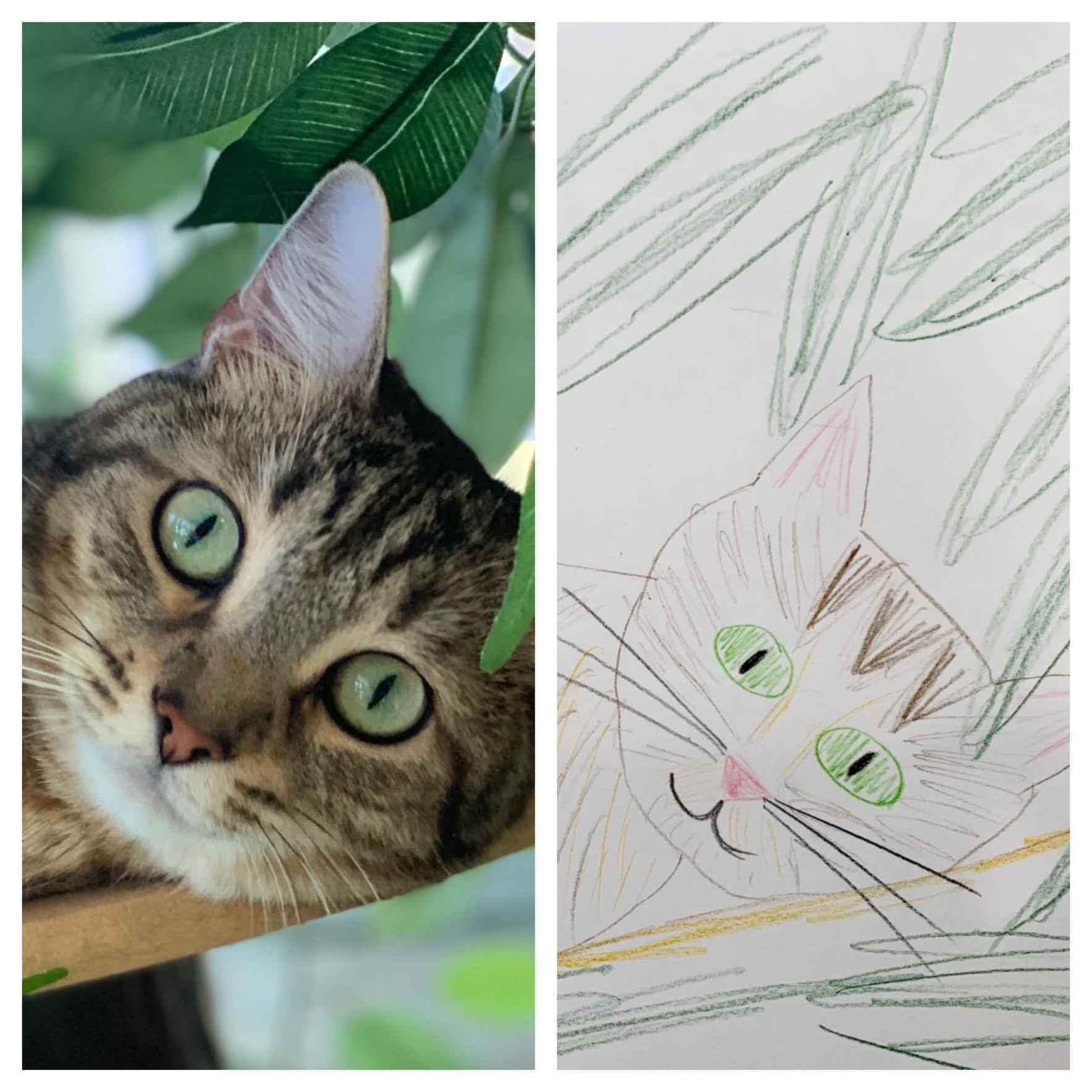 Help Us Raise Money for the Animals by Letting our Staff Draw Your Pet! image