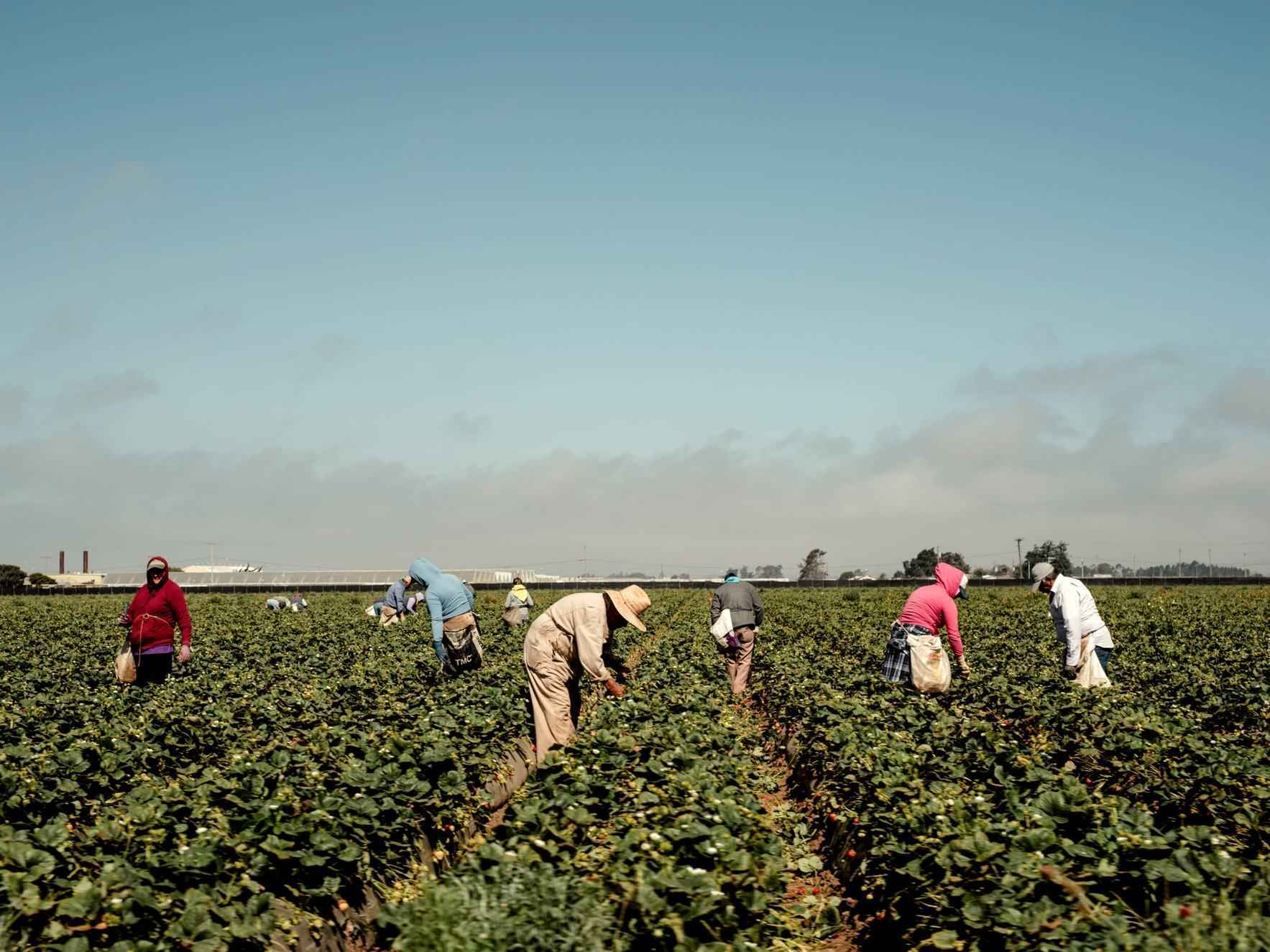 Getting Essentials to Essential Workers: Farm Workers image