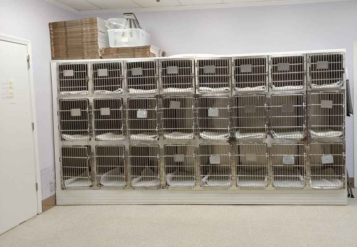 Help us Expand our Cat Cage Area & Assist Cats in the Community ($5,000 Matching Challenge) image