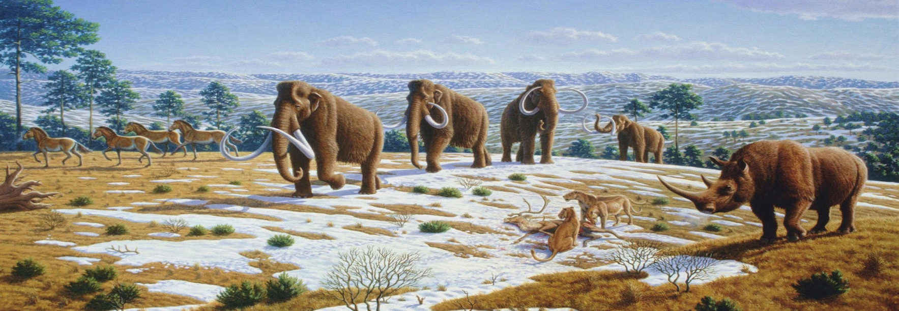 Help Revive The Woolly Mammoth And Restore It To The Arctic Wild! image